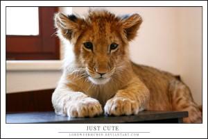 Just cute ...