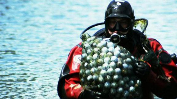 Diver-for-balls