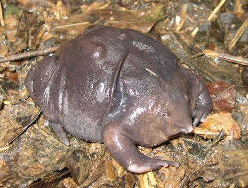 Weird Animal Indian Purple Frog